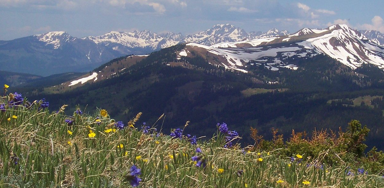 alpine_tundra_copper_mountain_colorado-1